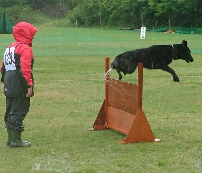 飼い主様と二人三脚でトレーニング